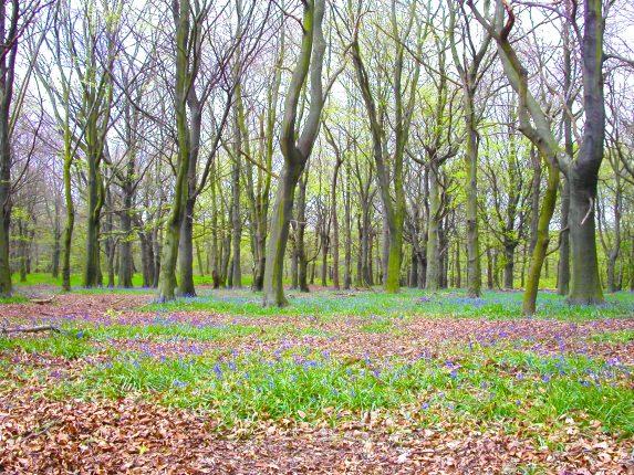 Notton Wood