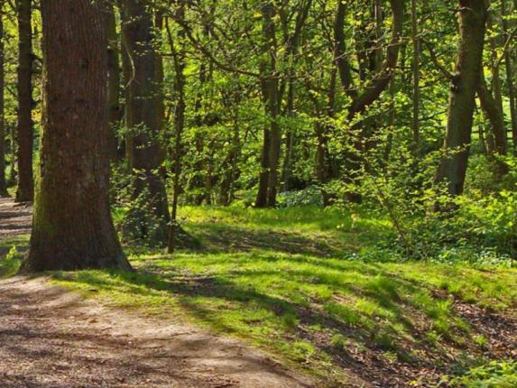 Stoneycliffe Wood Nature Reserve