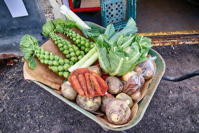 Brickyard Organic Farm