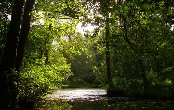 Seckar Wood Nature Reserve