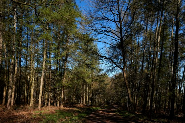 Haw Park Woods