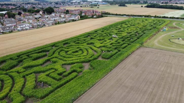 Farmer Copleys Corn Maze