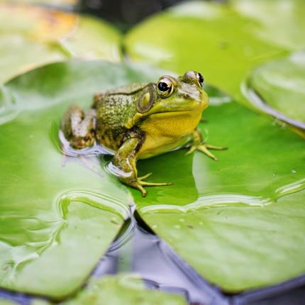 Froglife Activity Day