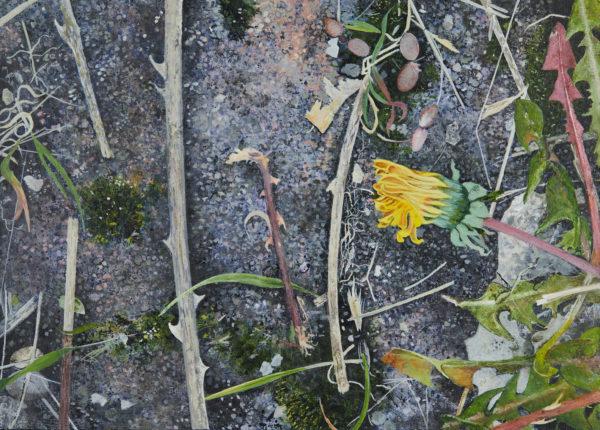 Dandelions and Double Yellows, Helen Thomas