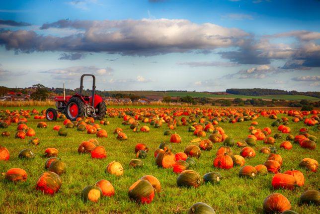 Farmer Copleys Pumpkin Festival 2021