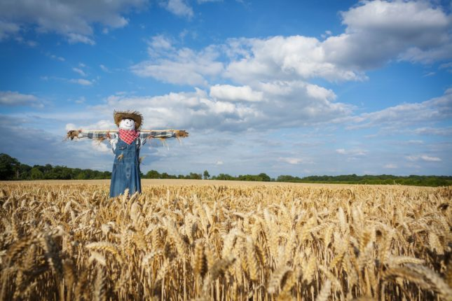 Scarecrow trail at Anglers Country Park